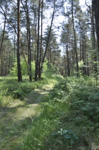 Schöner Wald in Angermünde